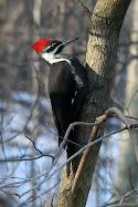 Potomac Valley Audubon Society