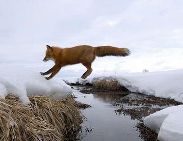 Lambang Mozilla Firefox6