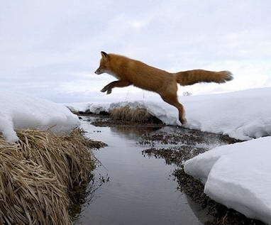 Lambang Mozilla Firefox5