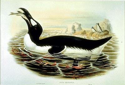 GreatAuk Gould 10 Spesies Hewan yang Menakjubkan yang telah Punah