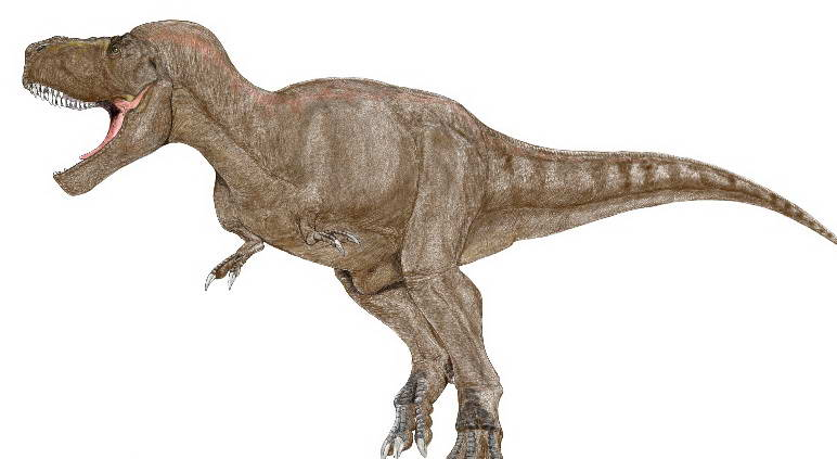 Tyrannosaurus rex 10 Spesies Hewan yang Menakjubkan yang telah Punah