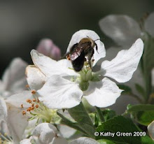 Plant for the Pollinators