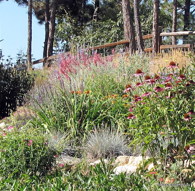 Waterwise gardens thrive above 7000' in Colorado - no Lawn Here