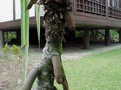 Gambar lucu atau photo lucu edisi buah dan pohon