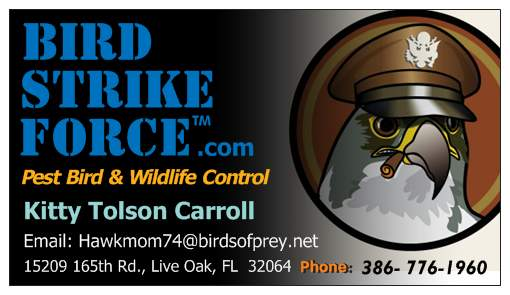 Bird Strike Force
