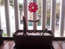 Cactus florido