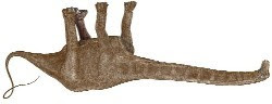 Yee Haa, Seismosaurus