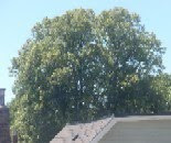 Tree June 11 2010