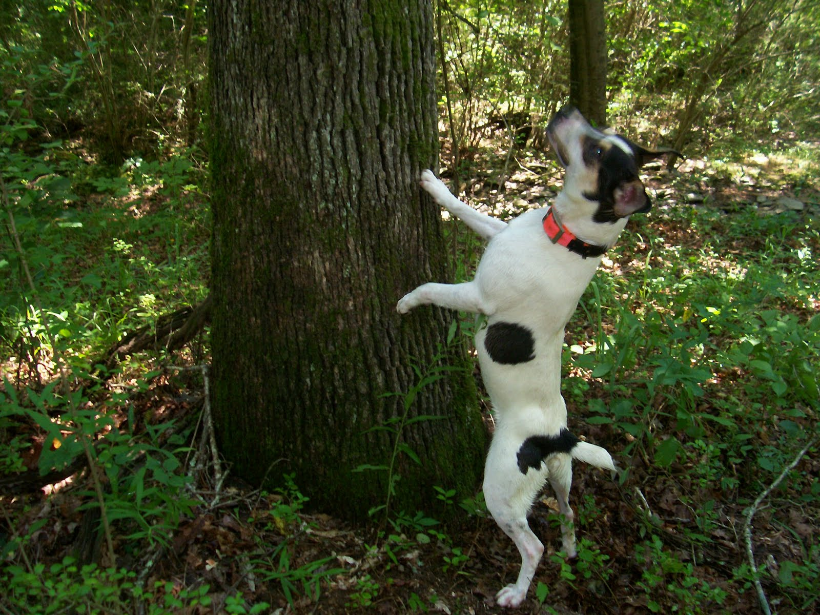Squirrel Dog Puppies For Sale In Alabama