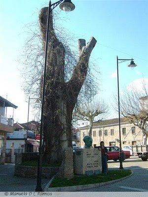 No Dia Da Poesia E Das Rvores Mesmo Que Vivem Depois Morte