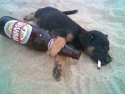 cães bebados