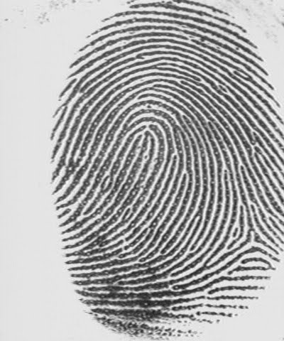 the main characteristics of fingerprint and its identification Start studying forensics chapter 14 test learn vocabulary, terms, and more the possibility of permanent scarring which only provides new characteristics for identification purpose since it is impossible to obliterate all t or f: afis, the automated fingerprint identification.