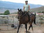 Dutch the Very Handsome and Busy Quarter Horse Gelding
