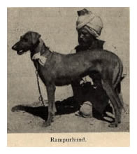 Rare Indian Breed Dogs