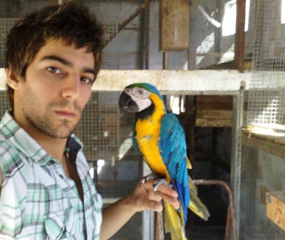 Aves Silva