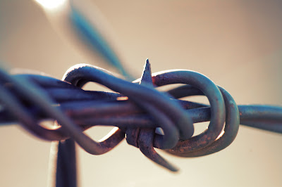 Barbed Wire Knot