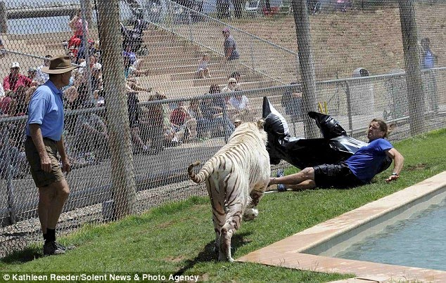 Trainer has lucky escape (with a white Bengal tiger)