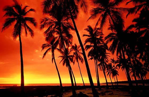 Hawaiian Aloha touching your