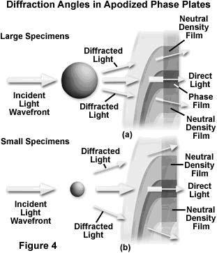 external image microscopia+de+contraste+de+fase+4.JPG