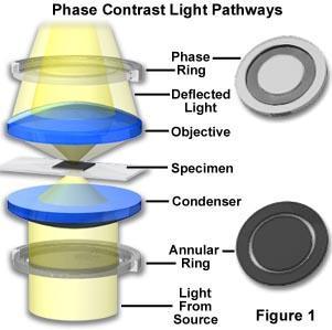 Figura.- Diagrama para el microscopio de contraste de fases. K: filtro anular, L: vista transversal del filtro anular, M: condensador, O-O': objetivo, P – P': ocular, Q: diafragma del ocular. La placa de fases está colocada entre las lentes del objetivo y funciona como otro filtro que crea la difracción de la luz. a y b: configuración de los filtros para producir el contraste negativo o positivo respectivamente.
