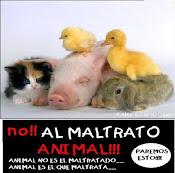¡NO AL MALTRATO DE LOS ANIMALES!.