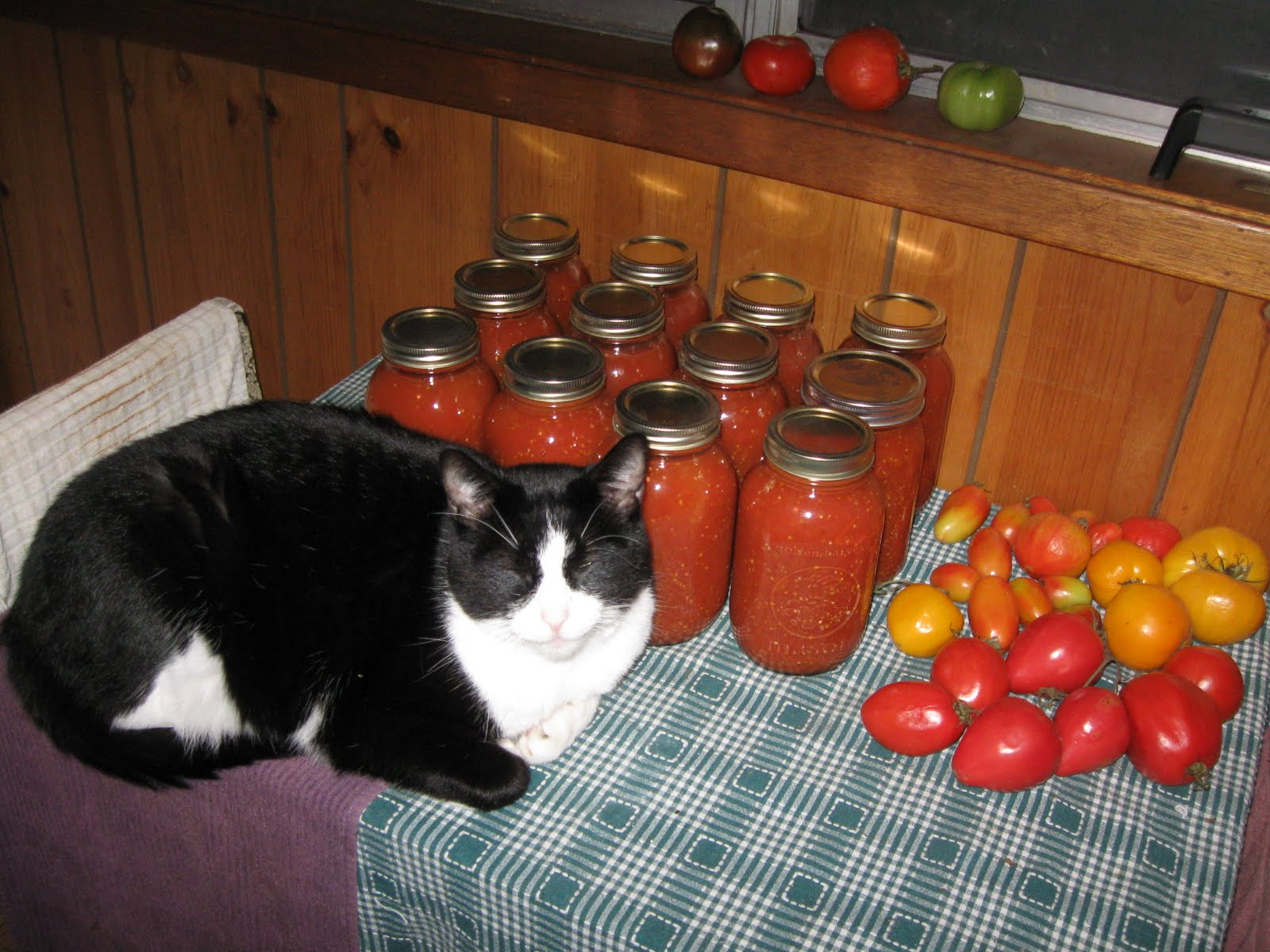 There will be no more warm jars for Rodger, the fat black cheshire cat, ...