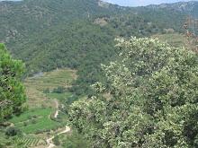 El paisaje que se ve desde nuestras viñas