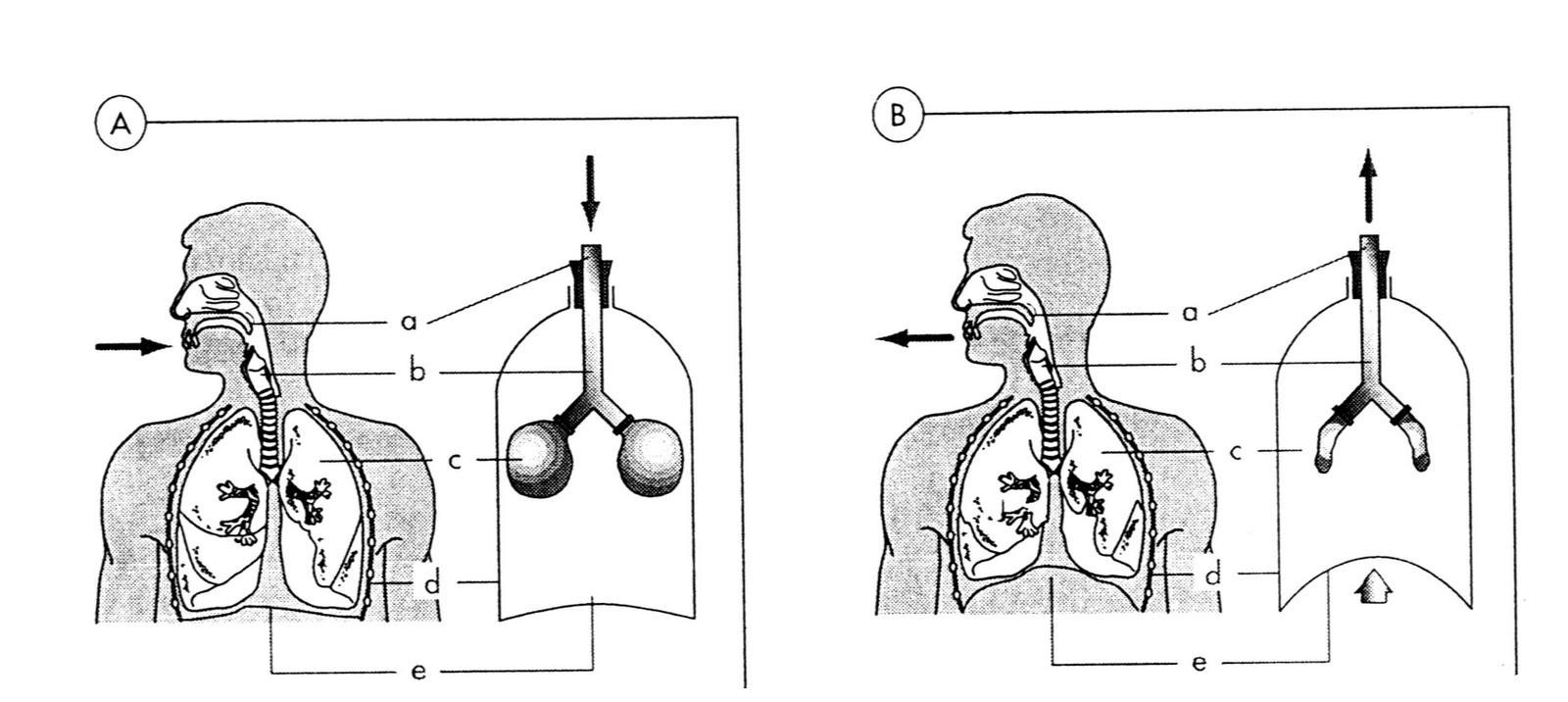 ACT Biología
