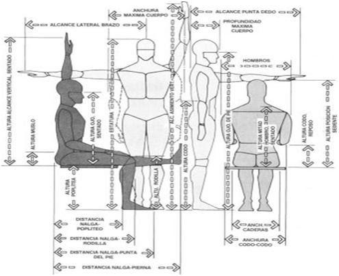 Tecnologia en actividad fisica la antropometria y ficha for Medidas antropometricas del cuerpo humano