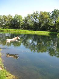 KJ Loves the Pond