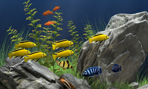 Marleo.NET: Dream Aquarium v1.7 - Protector de pantalla
