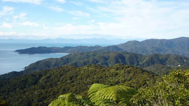 Cuando cogemos algo de altura distinguimos la magnificencia de Abel Tasman National Park