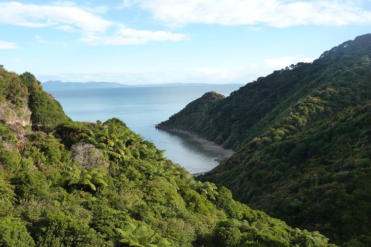 Los helechos se mezclan con el sol y el remanso de las olas en Abel Tasman
