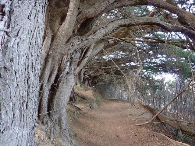 Andar por la península de Akaroa puede resultar tétrico