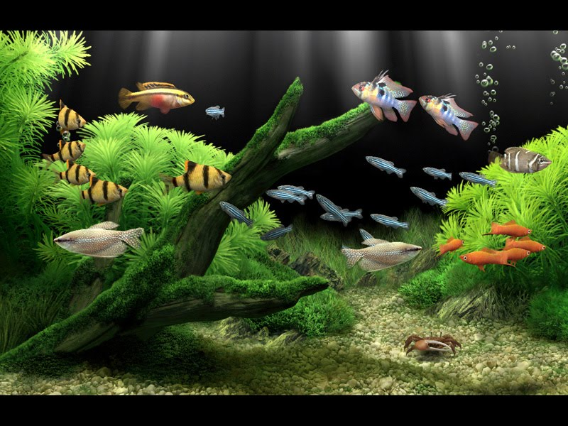 Descarga Dream Aquarium v1.7 - Facility-War3z!