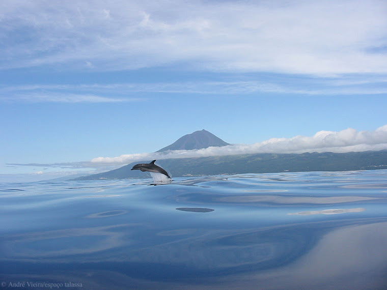 DOLPHIN AND PICO ISLAND IN THE BACK!