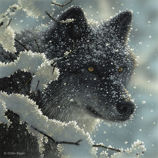 Impressionantes Pinturas de Animais Selvagens - 06