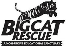 Help Save Abused Big Cats!