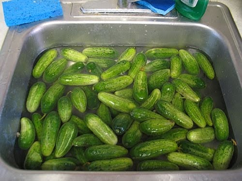 how to make homemade pickle chips