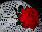 Una rosa para Florencia