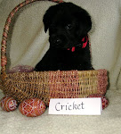 Cricket - HD