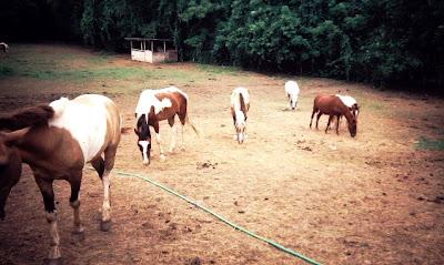 http://3.bp.blogspot.com/_SLS9a7XRoGA/RrthlZAcNuI/AAAAAAAAAdQ/KYYI21fR3Hk/s400/Horse%2BPasture.jpg