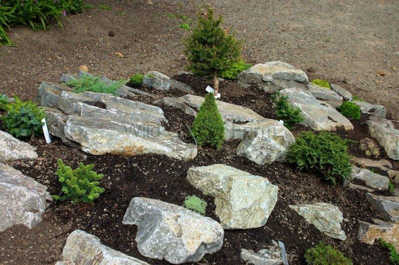 Wild Ginger Farm News Blog Dwarf And Miniature Conifers