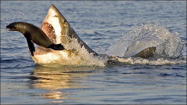 Mitos y verdades sobe los tiburones