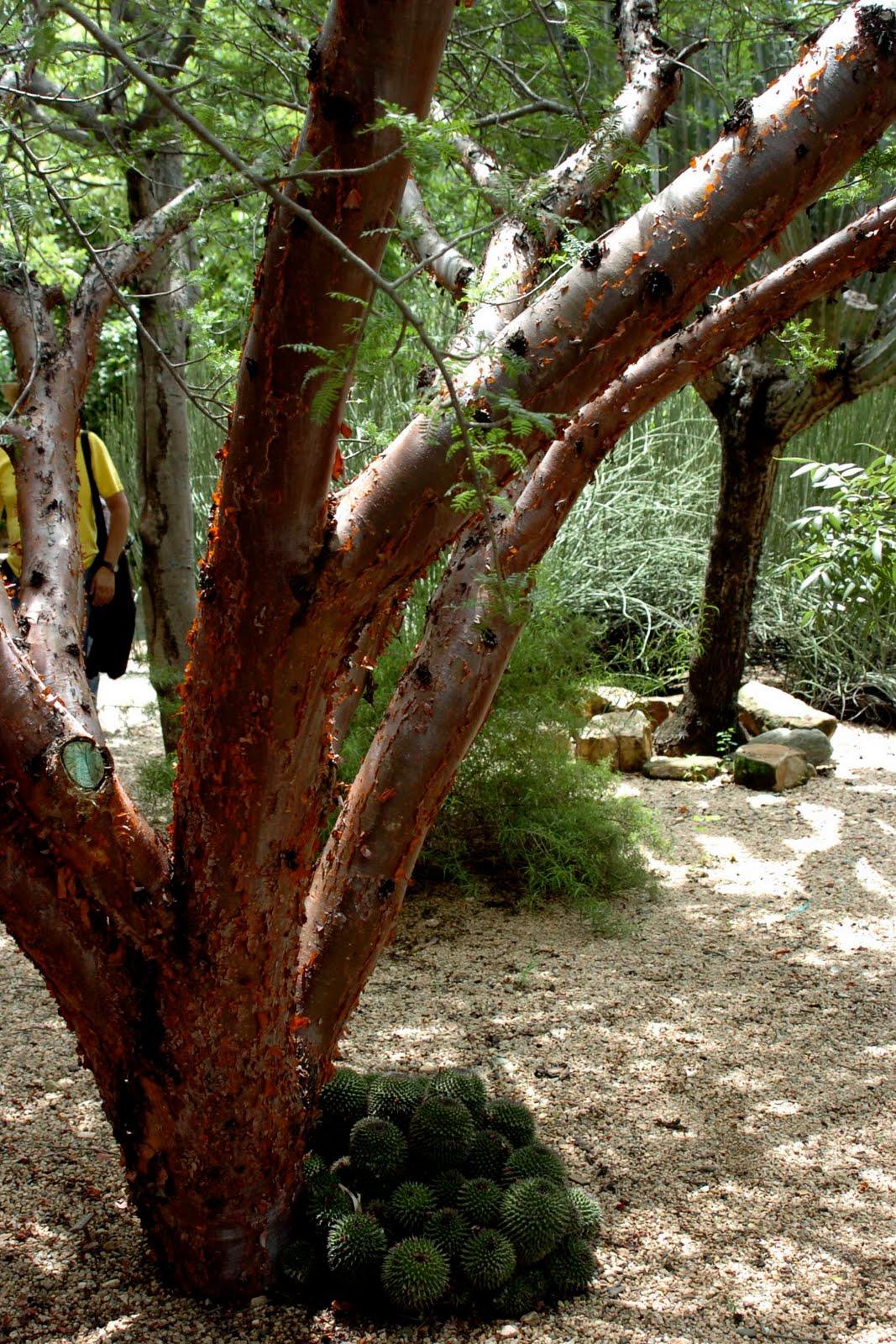 The Traveler Unaware Ethnobotanical Garden Part 1 Lots