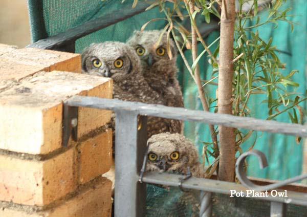 Caméras live 24/24 d'oiseaux 002