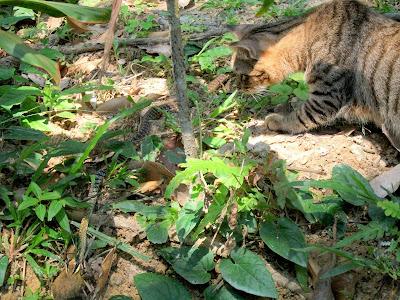 The Meaning Of Life Kisah Kucing Katak Dan Ular Lidi