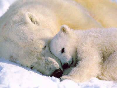 19 polar bear
