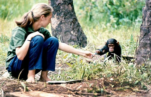 photo jane goodall