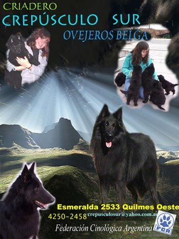 CREPUSCULO SUR ovejeros belga GROENENDAEL
